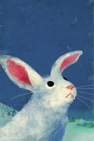 17_conejo-en-proceso-.jpg